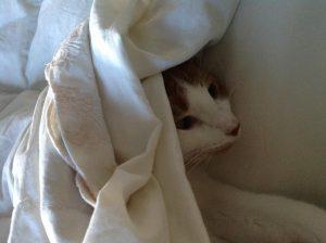 Gus Bennett, cat under covers