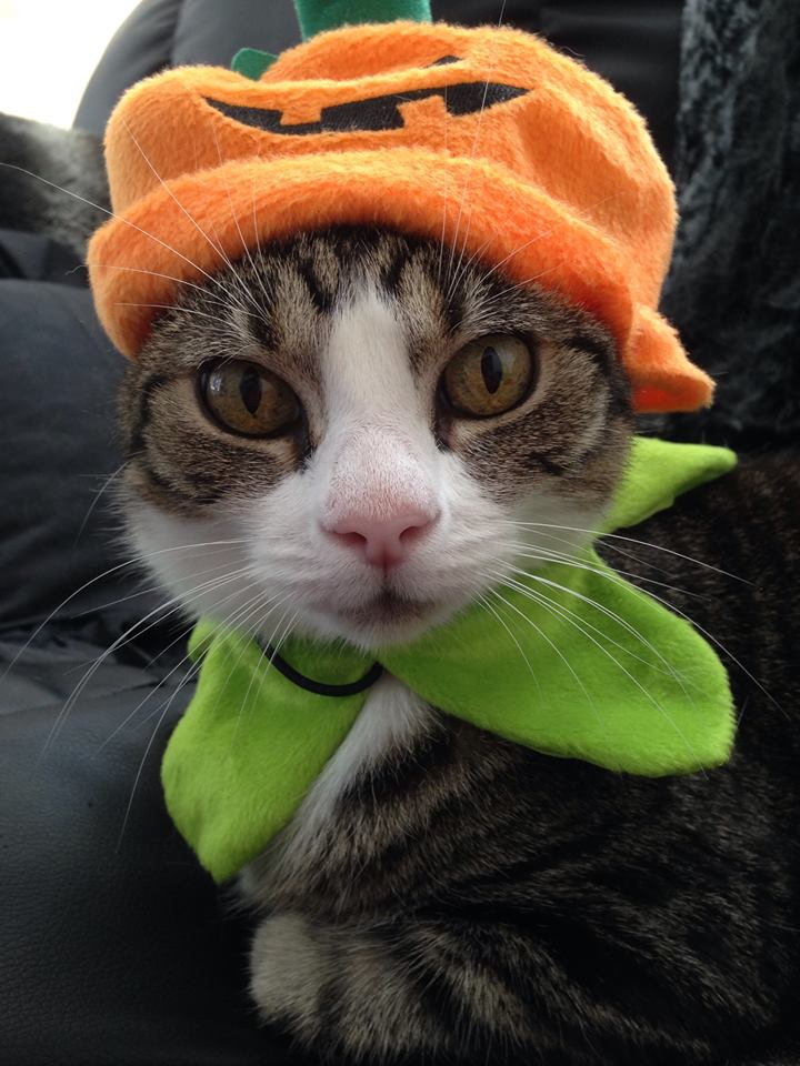 Halloween Linus