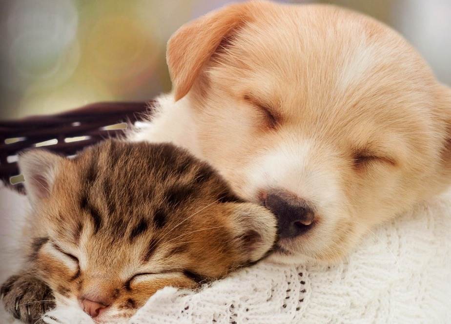 Puppies and Kittens need our Protection, as do all animals. Professional Pet Sitting Etc.