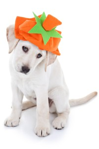 Halloween puppy for Professional Pet Sitting Etc