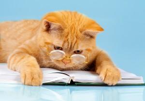 orange tabby cat reading