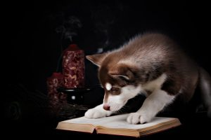 Husky reading