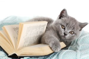 Cute gray kitten with open book on warm plaid, closeup