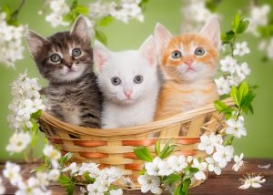 May 2017 Newsletter Kittens