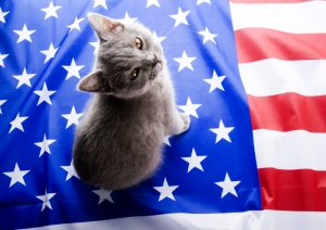grey kitten with us flag