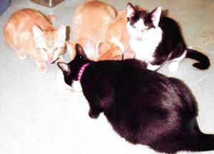 rescue kitties