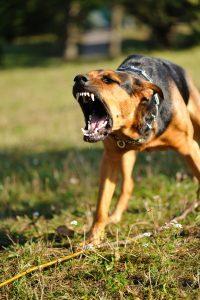 Dog Attack, animal bites
