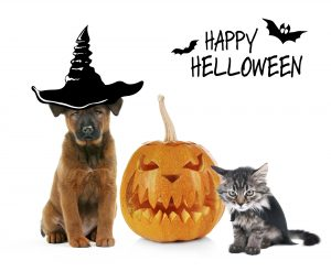 October 2017, Cute kitten and dog wearing funny costumes for Halloween, isolated on white