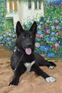 Merlin Professional Pet Sitting Etc. Pet Sitting NH, Pet Sitting Nashua NH, Dog Walking NH, Pet Care NH