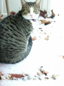 Linus - Professional Pet Sitting Etc.