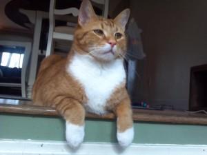 William - Professional Pet Sitting Etc.