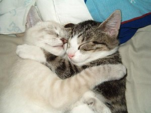 Felice and Linus - Professional Pet Sitting Etc.