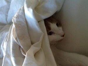 Gus Bennett, cat under covers