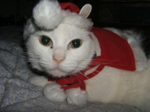Spanky, cat dressed for Chrsitmas