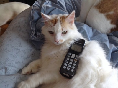 Sazar Answering the phone for Professional Pet Sitting Etc