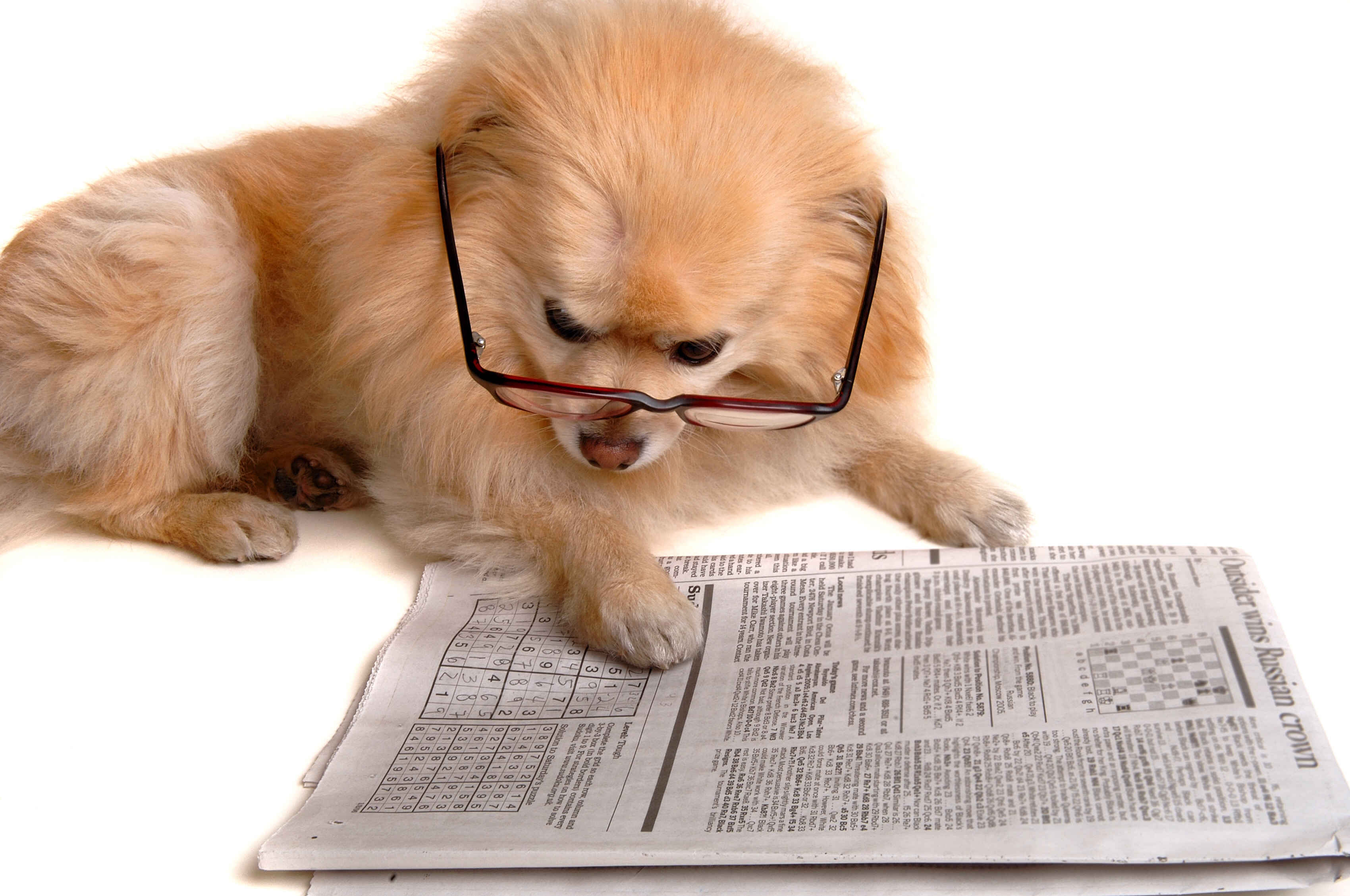 Join Pepper in reading News from Professional Pet Sitting Etc.