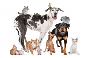 Group of dogs, cats and other pets