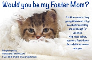Be a Foster Mom Professional Pet Sitting Etc