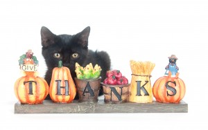 Max & Everyone at Professional Pet Sitting Etc wish you a Happy Thanksgiving