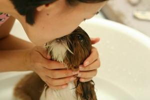 Love a Clean Dog !! Professional Pet Sitting Etc