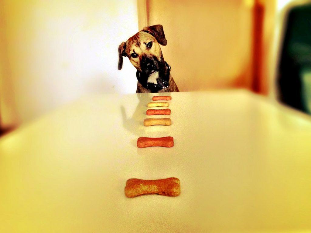 dog and treats
