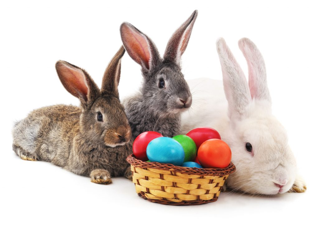 Two Easter bunnies with colored eggs in the basket isolated on a white background.