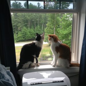 kitties looking out the window