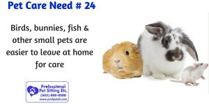 bunny, guinea pig & mouse
