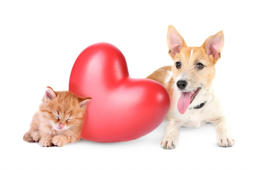 Dog and cat with heart