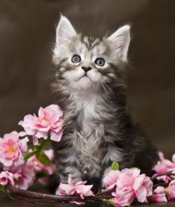 Professional Pet Sitting Etc June 2019 Newsletter - Professional Pet
