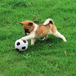 Puppy with soccor ball