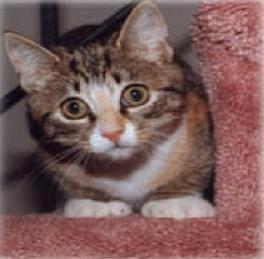 Whisper kitty 2