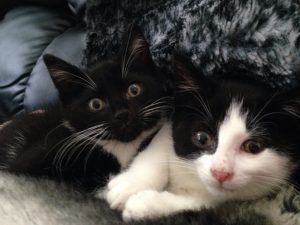 Buster and Bobby, Manchester Animal Shelter, June 2015